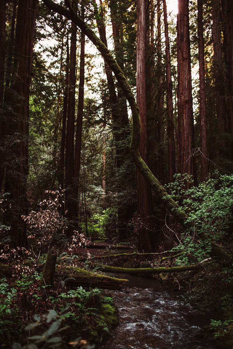 muirwoods-photographer-nature004