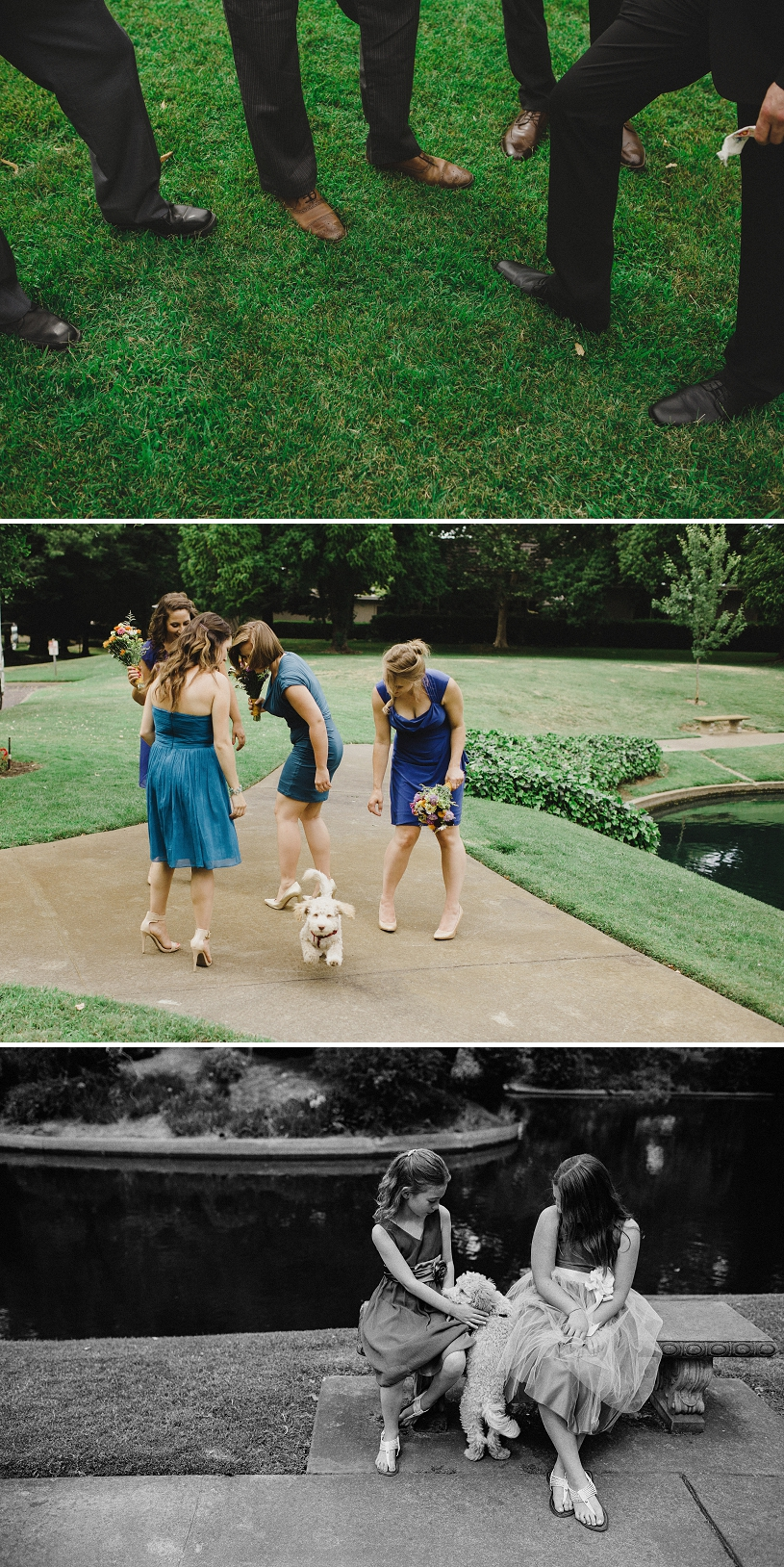 cute dog wedding crashes