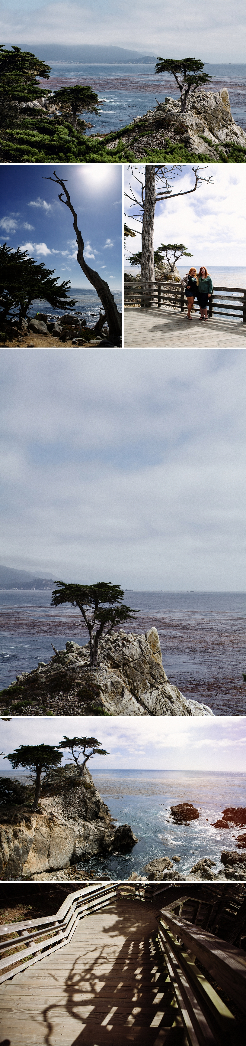 The Lone Tree in Carmel, California