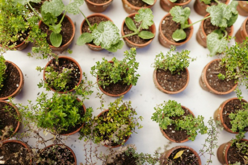 potted plant gift favors at a eco organic gardening wedding in woodside california by heather elizabeth photography