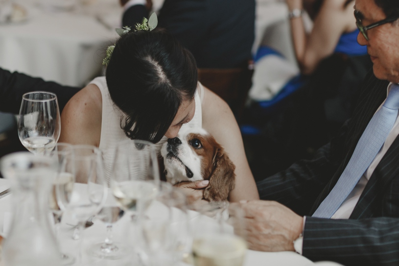 adorable dog at a wedding loving on the bride and groom in san francisco by heather elizabeth photography