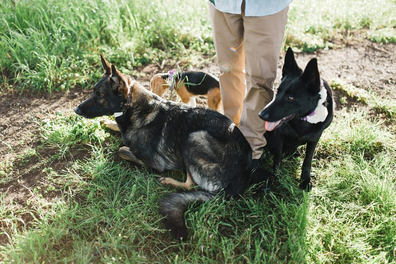 adorable dog engagement session in Point Reyes Seashore